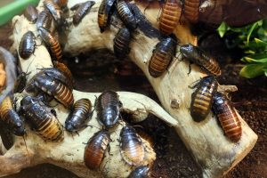 Keeping Pests Out Of Your Storage Units